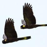 Yellow Tail Black Cockatoo2